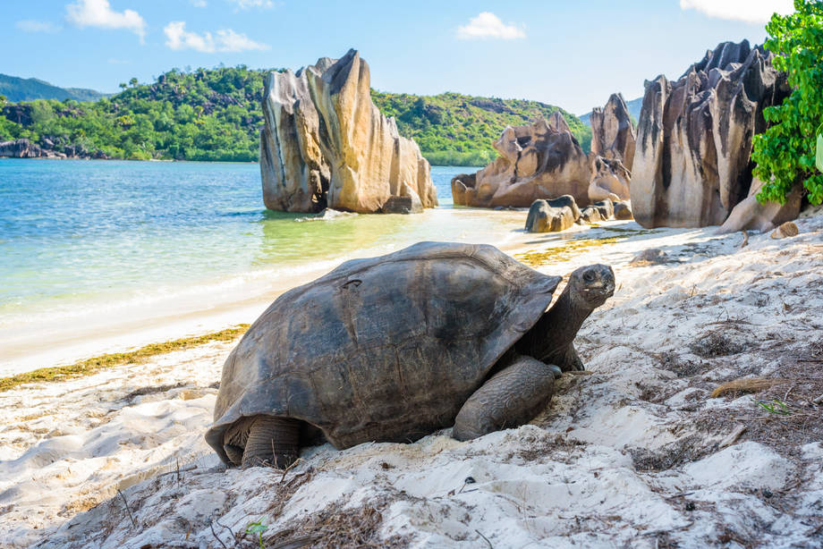 4* AIDAblu Mauritius, Seychellen & Madagaskar 3 inkl. Flug