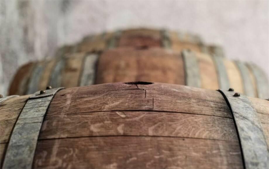 Weintraubenernte am Balaton